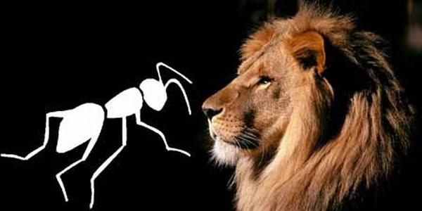 aslan-karınca
